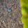 CULLIFORD SLABS & CELANDINES: SIGNS OF SPRING AT AG